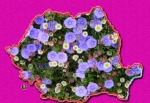 ROMANIA-HARTA-FLORI-WB